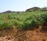 Half plot Land at Amrahia. 50*70ft