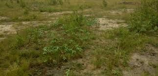 Land at Katamanso (Ashiyie) behind the Regimanuel Estate for sale