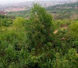 Registered Land for sale at Adjen Kotoku