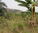 Land for sale at Victoria City near Nsawam and Dobro.