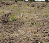 Very Reduced Lands~Prampram✓
